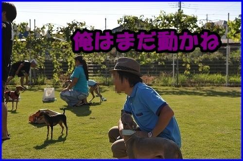 DSC_2495_20120811233539.jpg