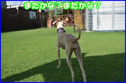 DSC_2617_20120816133024.jpg