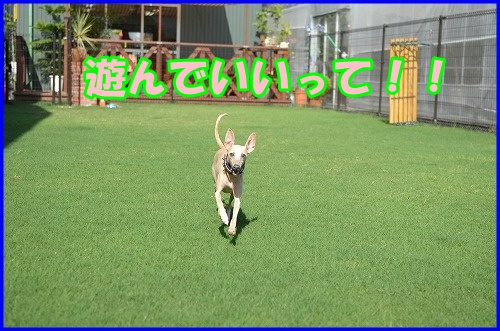 DSC_2622_20120816133025.jpg