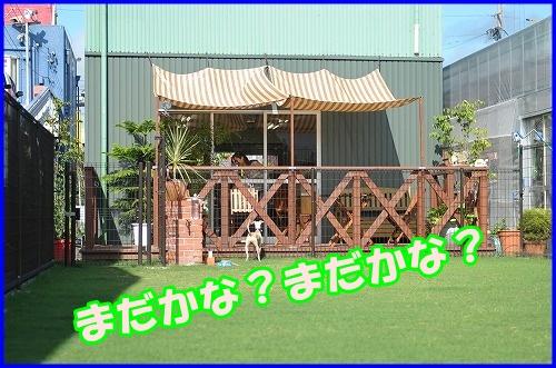 DSC_2625_20120816133024.jpg