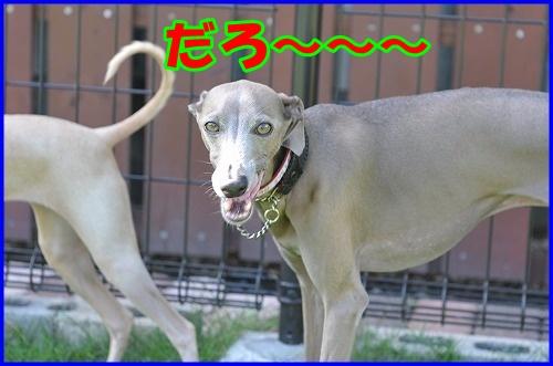 DSC_2658_20120816133306.jpg