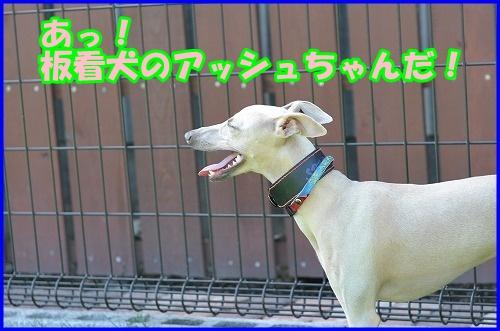 DSC_2660_20120816133305.jpg