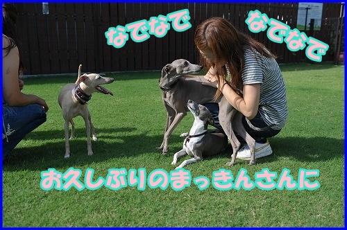 DSC_2664_20120816133306.jpg