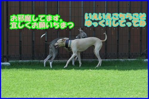 DSC_2666-crop.jpg