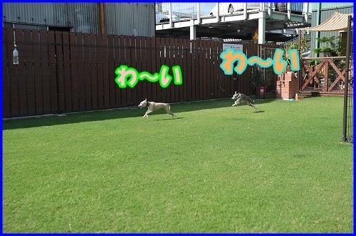 DSC_2681_20120816133307.jpg
