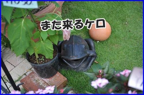 DSC_2702_20120816133403.jpg