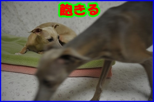 DSC_2879_20120828212614.jpg