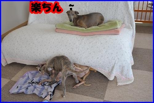 DSC_3161_20120918225248.jpg