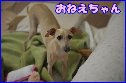 DSC_3209_20121007224928.jpg
