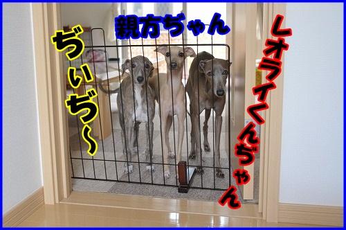 DSC_3352_20121023223235.jpg