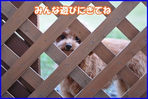 DSC_3473_20130106220801.jpg