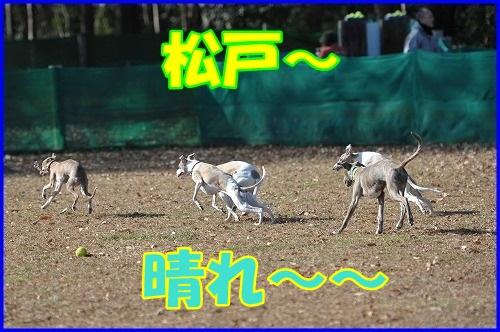 DSC_3944_20121217220732.jpg