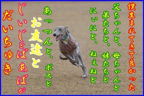 DSC_4160_20121226002204.jpg