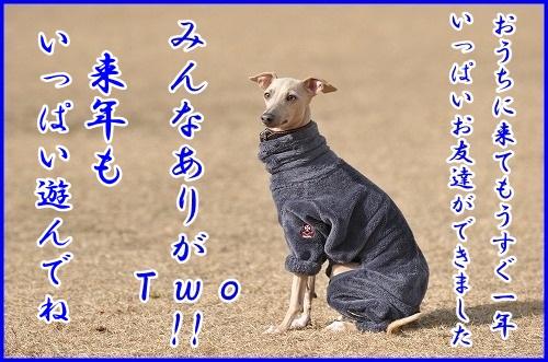 DSC_4277_20121226002204.jpg