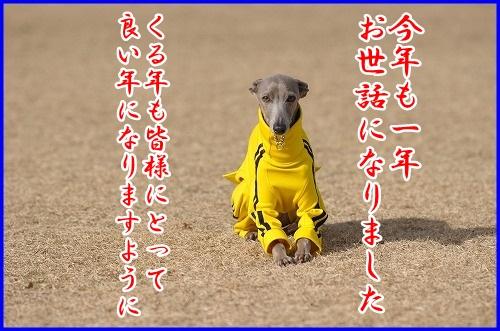 DSC_4278_20121226002234.jpg