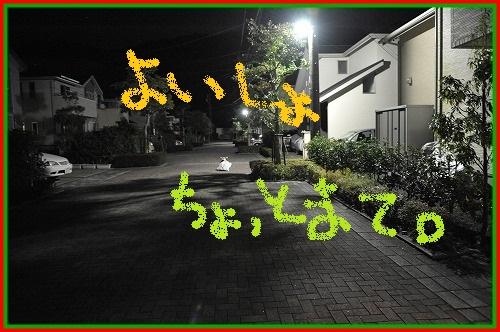 DSC_4312_20121225004507.jpg
