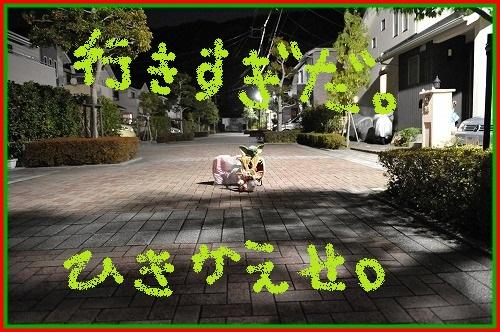 DSC_4321_20121225004508.jpg