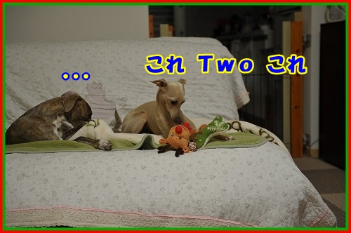 DSC_4390_20121225004851.jpg