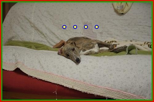 DSC_4402_20121225004915.jpg
