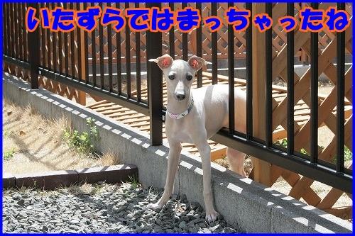 IMG_9232_20121007224723.jpg