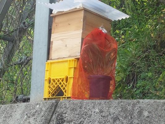 蜂の巣箱20120509