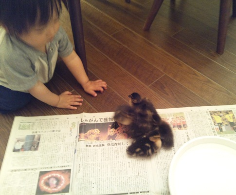 20120606アイガモさんと純護さん