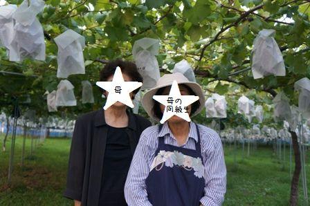 ぶどう園②