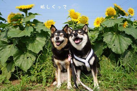 ひまわり畑だぁーー☆⑤