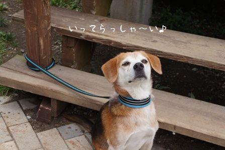 看板犬ゴエモン