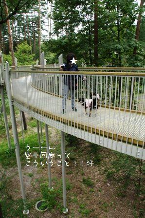国営アルプスあづみの公園②