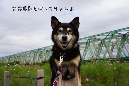平井大橋①