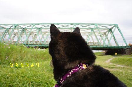 平井大橋②