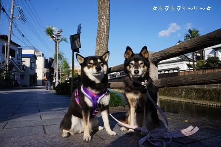 栃木蔵の街⑥