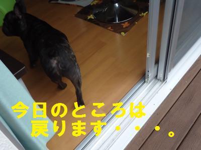 DSC00990_convert_20120615214754.jpg