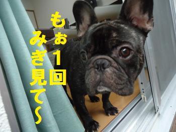 DSC01035_convert_20120620212223.jpg
