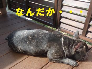 DSC01058_convert_20120624220336.jpg