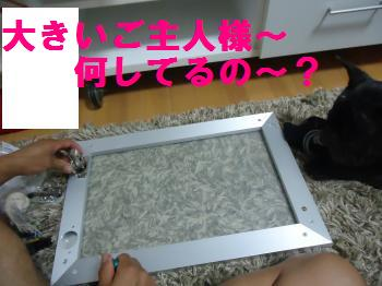DSC01070_convert_20120804213005.jpg