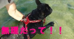 DSC01171_convert_20120715211111.jpg