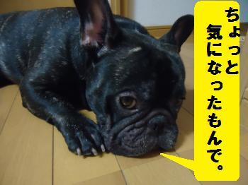 DSC01335_convert_20120814205614.jpg