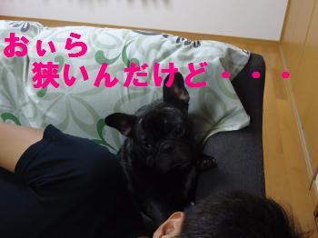 DSC01428_convert_20120826142504.jpg