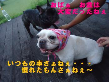 DSC01468_convert_20120902204516.jpg