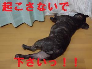 DSC01469_convert_20120902204531.jpg