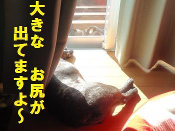 DSC01503_convert_20120913190019.jpg
