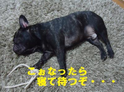 DSC01536_convert_20120916175916.jpg