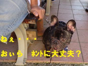 DSC01541_convert_20120917203009.jpg