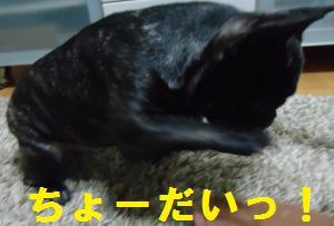 DSC01570_convert_20121020191557.jpg