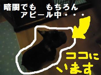 DSC01620_convert_20120930134611.jpg