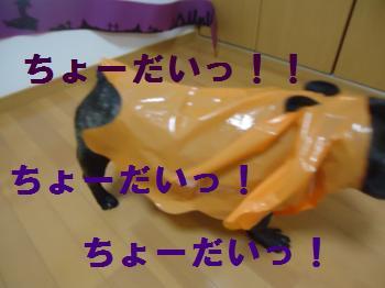 DSC01753_convert_20121101192511.jpg