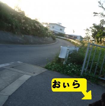 DSC02042_convert_20121216102403.jpg