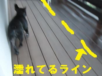 DSC02177_convert_20130106121819.jpg